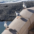 Seagulls standing on the parapet — Stock Photo