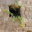 Stock Photo: Window on Medieval city wall