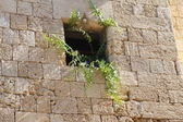 Window on the Medieval city wall — Stock Photo
