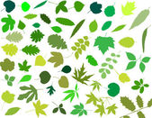 Silhouettes of leaves — Stock Vector