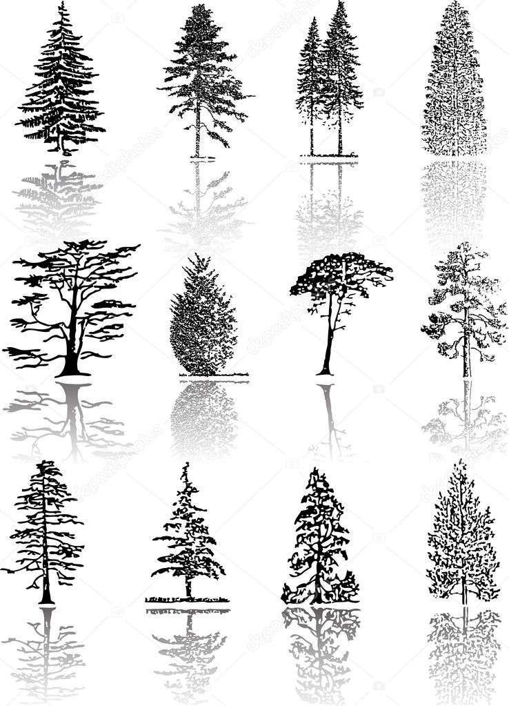 Tree  silhouettes  — Stock Vector #1947548