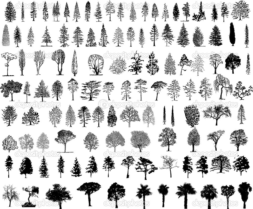 Tree Plan Vector Tree Silhouettes Vector by