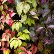Fall leaves on the wall — Stock Photo