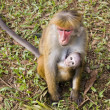 Monkey mom and monkey baby - Stock Photo