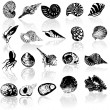 Vector illustration of different  sea  s - Stock Vector