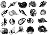 Vector illustration of different sea s — Stock Vector