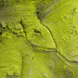 Green tree bark texture — Stock Photo