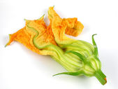 Squash blossom — Stock Photo
