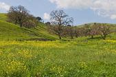 Green hills — Stock Photo