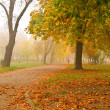 Autumn scene in the park — Stock Photo