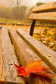 Leaf fallen on a bench — Stock Photo