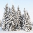 Stock Photo: Snow-covered fur-trees