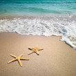 Two starfish on a beach — Stock Photo