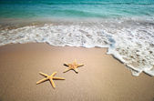 Two starfish on a beach — 图库照片