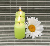Candles and flower — Stockfoto