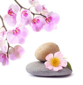 Orchid flower and stones — Stock Photo
