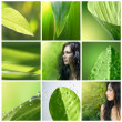 Green collection — Stock Photo