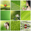 Stock Photo: Green collection