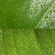 Green leaf with water drops — Stock Photo #1972376