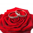Wedding rings in rose — Stock Photo