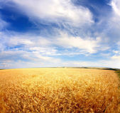 Meadow and sky — Stock Photo