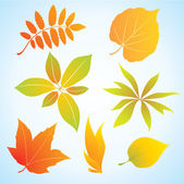 Autumn leaf — Stock Vector