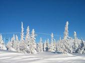 Spar in sneeuw vallei — Stockfoto