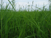 Overgrown green grass — Stock Photo