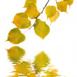 Beautiful golden leaves in autumn — Stock Photo #1927556