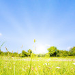 Idyllic lawn with sunlight in summer — Stock Photo #1928521