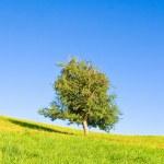 Idyllic meadow with tree — Stock Photo