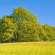 Idyllic meadow with tree — Stock Photo