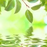 prachtige groene bladeren — Stockfoto