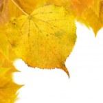 piękne złote liście jesienią — Zdjęcie stockowe