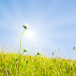 Idyllic lawn with sunlight — Stock Photo #1929489