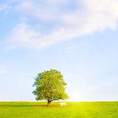 Idílico prado con árbol — Foto de Stock