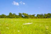 Idílico prado en verano — Foto de Stock