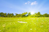 Idyllic lawn with sunlight in summer — Stock Photo