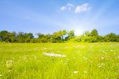 Jardín idílico con la luz del sol en verano — Foto de Stock