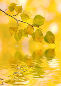 Beautiful golden leaves in autumn — Stock Photo