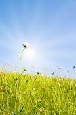 Jardín idílico con la luz del sol — Foto de Stock
