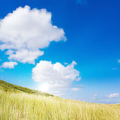 Idyllic dunes with sunlight — Stockfoto