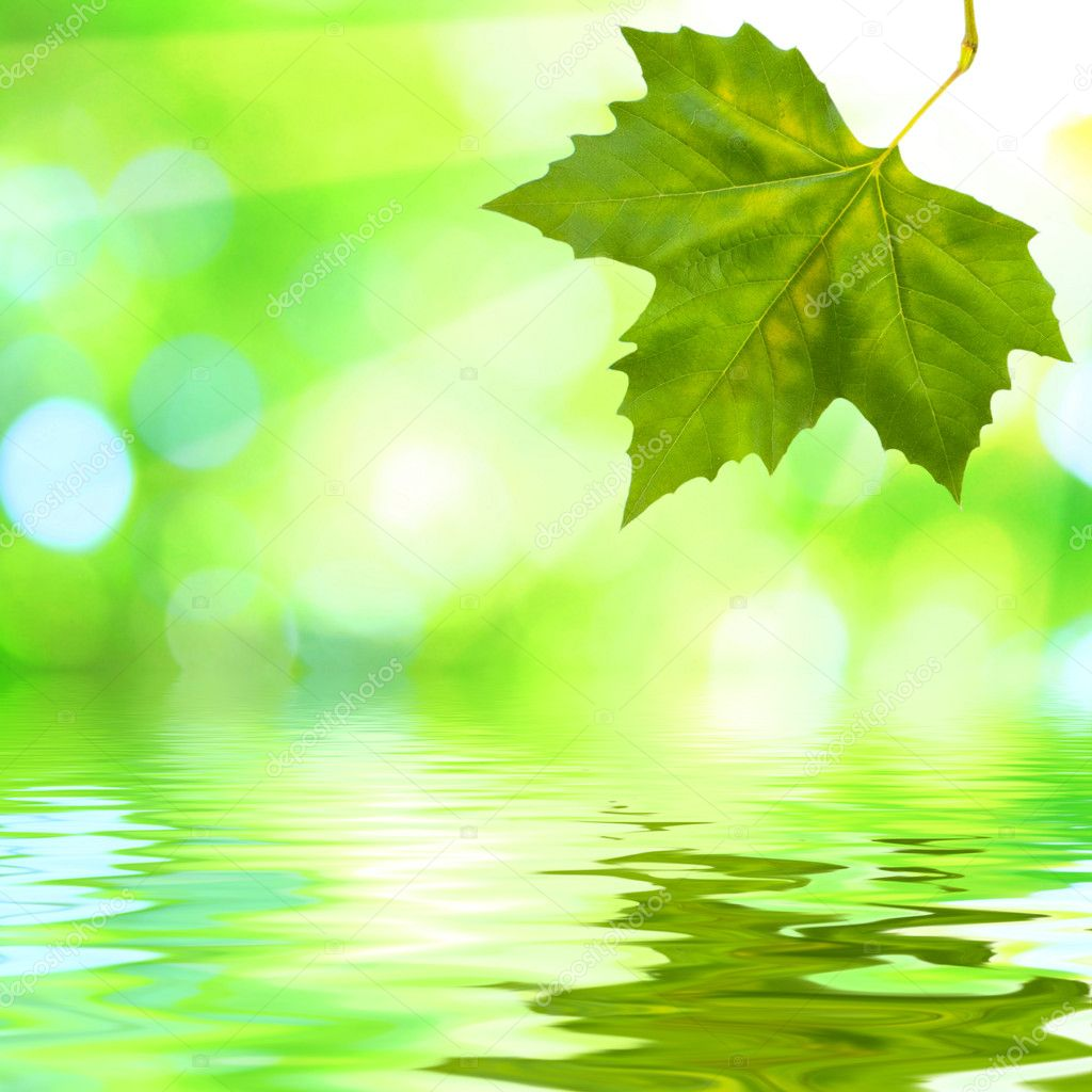 Beautiful green leaves with green background and reflection in spring — Stock Photo #1928227