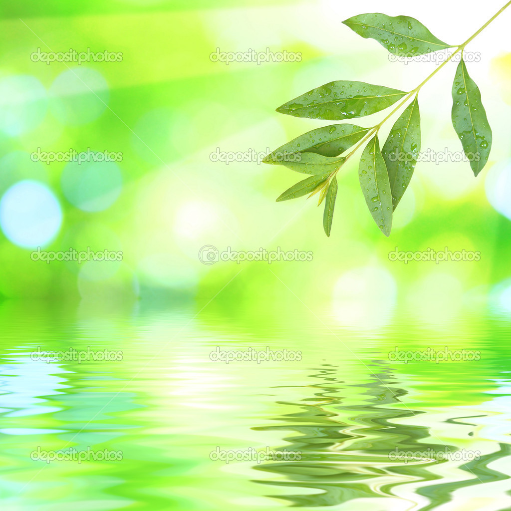 Beautiful green leaves with green background and reflection in spring — Stock Photo #1928392