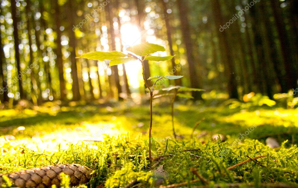 Beautiful scenery and sunbeams in the forest — Stock Photo #1928880
