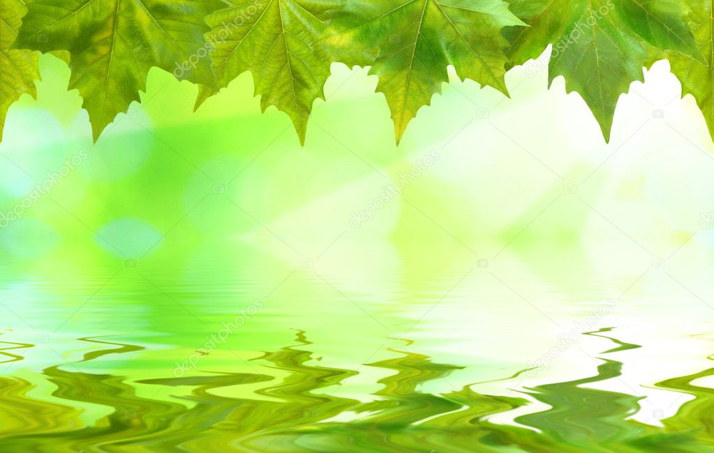 Beautiful green leaves with green background and reflection in spring — Stock Photo #1928903