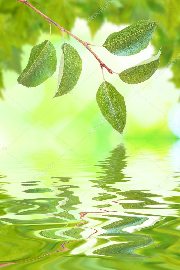 Beautiful green leaves with green background and reflection in spring  Stock Photo #1929188