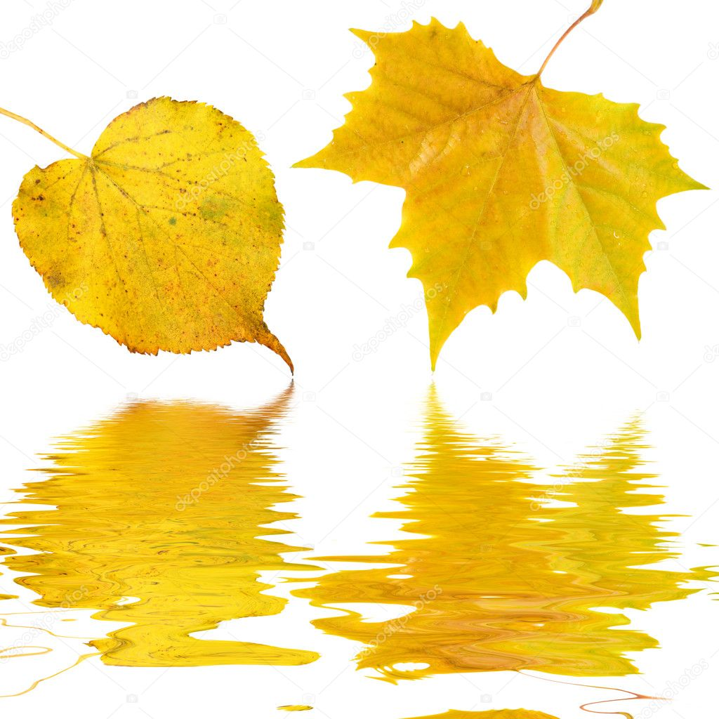 Beautiful golden leaves in autumn  Stockfoto #1929472