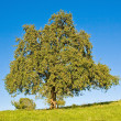 Stock Photo: Idyllic meadow with tree