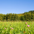 Idyllic meadow with tree — Stock Photo #1932109